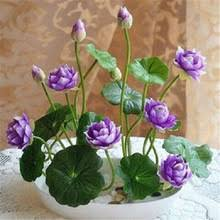 Buy <b>hydroponic</b> plant water and get free shipping on AliExpress.com