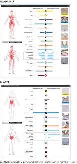Circulating plasma concentrations of angiotensin-converting ...