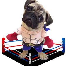 <b>Pet</b> Boxer <b>Costume Clothes</b> for Dogs Pugilism <b>Cosplay Suit</b> Funny ...