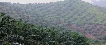 """Résultat de recherche d'images pour """"Agro-industrial Park Cameroon"""""""