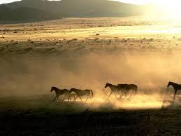 Resultado de imagen para Namibia tourism