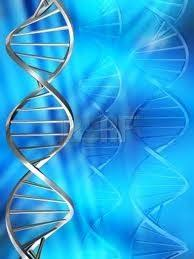 """Résultat de recherche d'images pour """"historique du lignage de l'ADN…"""""""