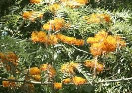 شجرة الحرير سبحان الله Images?q=tbn:ANd9GcS9ddGLc8epCGzx-2QCGA_qKco8JLJkIyGTPs9oWtM0SuSpouGLQw