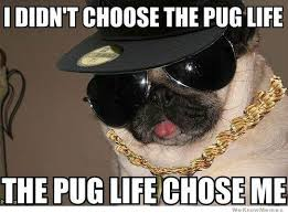 Image result for pug gif