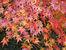 navigator hyakunin isshu one hundred poets one poem each hyakunin isshu one hundred poets one poem each poem 17 ariwara no narihira