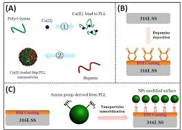 Tailoring of dopamine-coated stainless steel with Cu(II ... - Frontiers