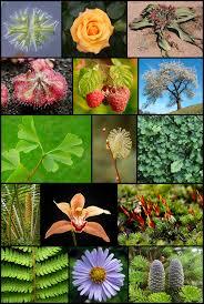 <b>Plant</b> - Wikipedia