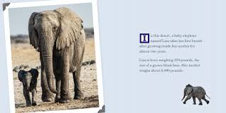 meet a baby elephant in the wild ababyelephantinthewild excerpt 2