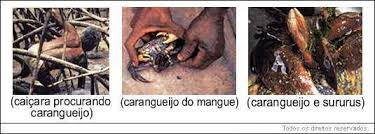 Resultado de imagem para IMAGENS DAS UTILIDADES DOS CRUSTÁCEOS E MOLUSCOS CRIADOS...