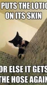 Funny Meme Catalogue - Best Funniest Memes HD Wallpapers ... via Relatably.com