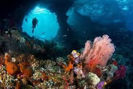Image result for raja ampat papua diving