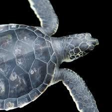 Green <b>Sea</b> Turtle | National Geographic