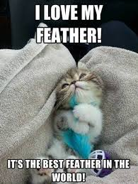I love my feather - Kitten - Memes and Comics via Relatably.com