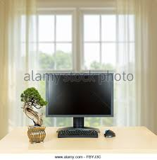 small bonsai tree on plain office desk with monitor stock image bonsai tree office window