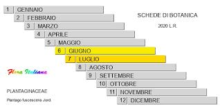 Plantago fuscescens [Piantaggine brunastra] - Flora Italiana