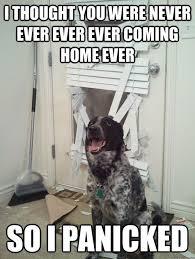 4th Of July Pet Safety Tips   Pet Care Blog via Relatably.com