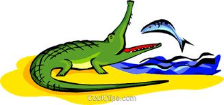 Resultado de imagem para peixes e crocodilos