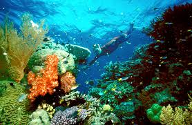 giving dead reefs new life fast growing corals newshour