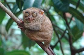 Hasil gambar untuk Primata
