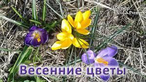 Первое цветение в саду. <b>Весенние цветы</b>. Природное земледелие