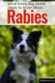 rabies in dogs pbs pet travel what all dog owners shouyld know about rabies in dogs including how to diagnose an