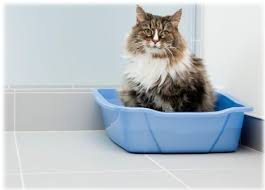 photo of cat using litter box getty images cat litter box