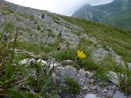 Acta Plantarum - Home Page