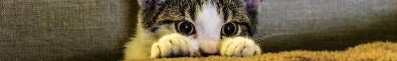Community <b>Cats</b> Programs - Georgian <b>Triangle</b> Humane Society