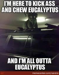 I Came Here To Kick Ass Memes. Best Collection of Funny I Came ... via Relatably.com