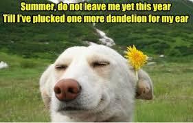 FunniestMemes.com - Funniest Memes - [Summer, Do Not Leave Me Yet ... via Relatably.com