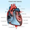 heart valve prolapse