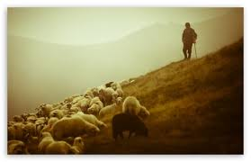 Image result for shepherd image