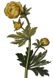 Flora Danica Online - Tavle/Tables 1821-1840