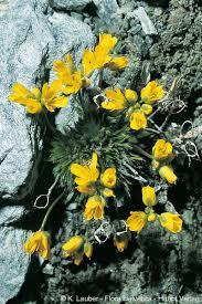 Flowering period (Flora Helvetica 2018)