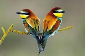 Kết quả hình ảnh cho đôi chim