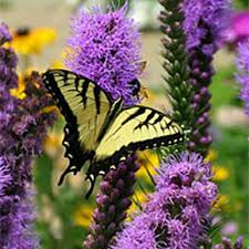 How to Attract <b>Hummingbirds</b>, Butterflies and Other Pollinators ...