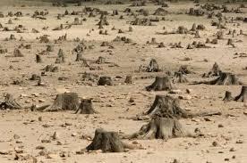 Безконтрольна вирубка дерев в лісах, захисних та інших лісових насадженнях завдає істотної шкоди природному фонду
