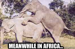 Meanwhile in africa... - elephantsex - quickmeme via Relatably.com