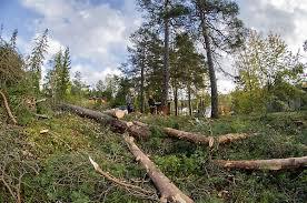 Bildresultat för trädfällare