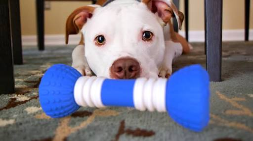 Balanced Diet For Dogs, Homemadedogtreats