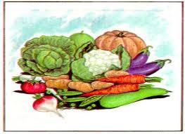 Dibuix de vàries verdures i hortalísses per mantenir una dieta sana i equilibrada