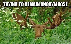 Moose, where? | Funniest Pictures via Relatably.com