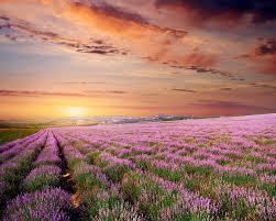 Край лаванды и розовых фламинго. Окситания – Прованс ...