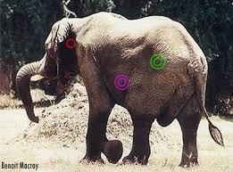 Elephant essay