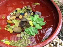 plants office garden green clean air indoor gardening best low light office plants