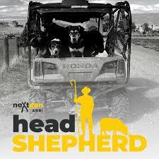Head Shepherd