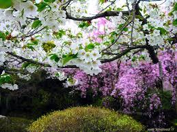 Risultati immagini per immagini di donne a primavera