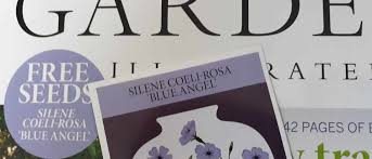 Sow your Silene 'Blue Angel' seeds NOW - Gardens Illustrated