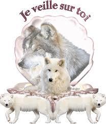 """Résultat de recherche d'images pour """"gifs des loups"""""""