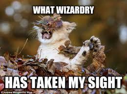 Confounded Lion Cub : memes via Relatably.com